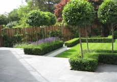 Patio and planting Wandsworth
